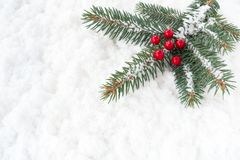 Christmas Tree Fir Twig with Holly Berries on Snow. Christmas tree fir twig with red holly berries covered with snowflakes and laying on snow background royalty free stock photo