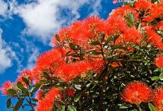 Christmas tree flowers Royalty Free Stock Images