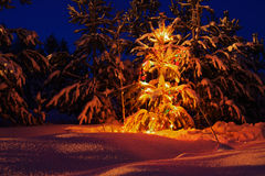 Christmas tree in the forest Royalty Free Stock Photos