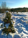 Christmas tree in forest Stock Photos