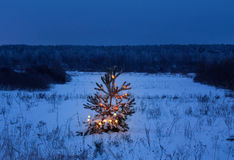 Christmas tree in  forest. Christmas tree in night forest Royalty Free Stock Photos