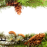 Christmas tree frame Royalty Free Stock Image