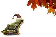 Christmas Tree Frog Sitting with Red Maple Leaves Stock Photo