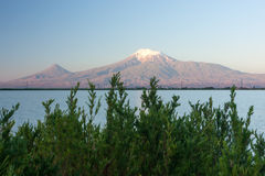 Christmas tree in front of Ararat mountain. Ararat mountain with snow on the top behind green christmas tree and blue lake stock photo
