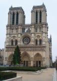 Christmas tree in front of Notre Dame de Paris. Paris, France, January 12, 2014. Christmas tree in front of main west facade of Cathedral of Notre Dame de Paris Stock Image
