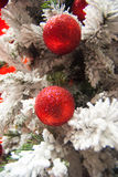 Christmas tree, frost and red. Frosted Christmas tree with red baubles Royalty Free Stock Image