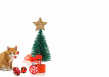 Christmas tree and ginger cat Royalty Free Stock Photo