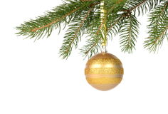 Christmas tree with golden bauble isolated on white. A branch of Christmas tree with golden bauble isolated on white Royalty Free Stock Images