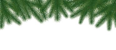 Christmas tree green branches on white background. Vector wide arch shaped New Year border Stock Image