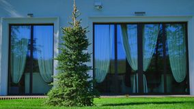 Christmas tree on the green grass near the windows.  stock video footage