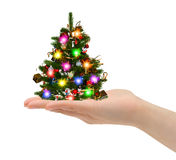 Christmas tree in hand Royalty Free Stock Photography