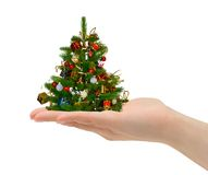 Christmas tree in hand Stock Photos