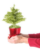 Christmas tree, hand held. Royalty Free Stock Images