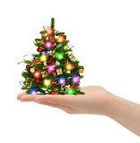 Christmas tree in hand Stock Image