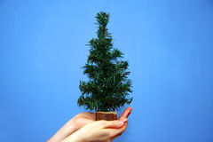 Christmas tree in hands Stock Photography
