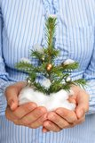 Christmas tree in hands. Stock Image