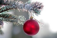Christmas tree with of hanging ball. Sprig of christmas tree with of hanging ball covered hoarfrost. Selective focus Stock Photos