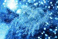 Christmas tree.Happy New Year. Christmas tree. Christmas nature background Stock Photography
