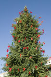 Christmas tree in historic Old Town of Albuquerque, New Mexico Stock Photos