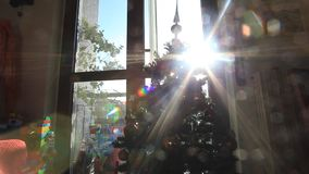Christmas tree. Holidays video taken in amateur family mood. Sun light reflection from the window stock video