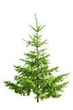 Christmas Tree I Stock Photo