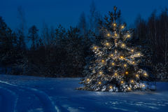 Free Christmas Tree In The Forest Clearly Stands Out Against . Stock Image - 85400261