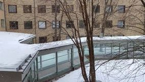 Christmas tree indoor decoration and snowfall outside in a university courtyard with branched tree stock video footage