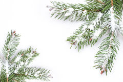 Christmas tree isolate on white background Stock Photos