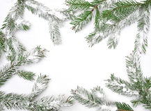 Christmas tree isolate on white background Stock Image