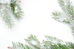 Christmas tree isolate on white background Royalty Free Stock Photography