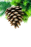 Christmas tree isolated Royalty Free Stock Images
