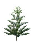 Christmas tree isolated on white background stock illustration