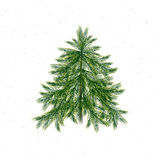 Christmas tree isolated on white background. And snow. Christmas pine twigs and spruce branches. Vector, EPS 10 Stock Images