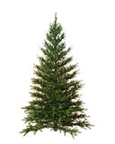 Christmas tree isolated on white background. Winter concept Royalty Free Stock Photography