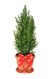 Christmas tree isolated on white. without shadow Royalty Free Stock Photo