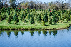 Christmas Tree Lane Farm Stock Images