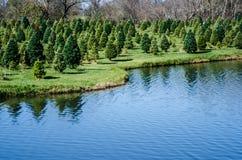 Christmas Tree Lane Stock Photo