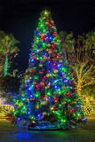 Christmas Tree. A large, outdoor lit Christmas tree in a park Royalty Free Stock Images