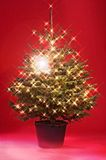 Christmas tree with lightchain. In front of a red background Royalty Free Stock Images