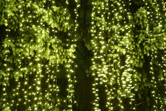 Christmas tree lights Royalty Free Stock Photo