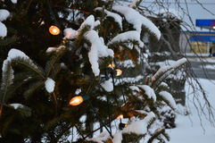 Christmas tree and lights, firs and snow. Near a road in Winterland, Quebec, Canada.n Royalty Free Stock Photos