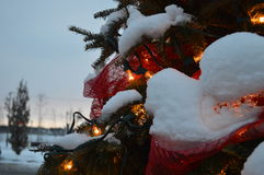 Christmas tree and lights, firs and snow. In winterland Royalty Free Stock Photo