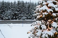 Christmas tree and lights, firs and snow Royalty Free Stock Images
