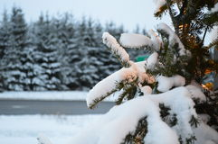 Christmas tree and lights, firs and snow. In winterland. Canada, Quebec, mountains and Santa Claus Royalty Free Stock Image