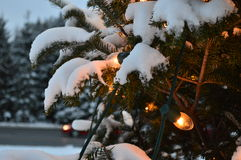 Christmas tree and lights, firs and snow. In winterland. Canada, Quebec, mountains and Santa Claus Stock Photo