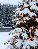Christmas tree and lights, firs and snow. In winterland. Canada, Quebec, mountains and Santa Claus Stock Photos
