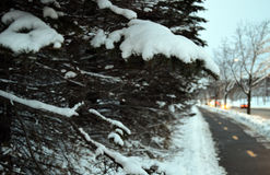 Christmas tree and lights, firs and snow. In winterland. Canada, Quebec, mountains and Santa Claus. Snow road Royalty Free Stock Photography