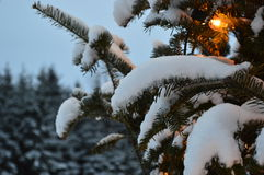 Christmas tree and lights, firs and snow. In winterland. Canada, Quebec, mountains and Santa Claus. Snow roads. Cars in the night Royalty Free Stock Photography