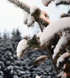 Christmas tree and lights, firs and snow. In winterland. Canada, Quebec, mountains and Santa Claus. Snow roads. Cars in the night Stock Images