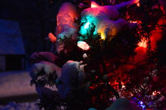 Christmas tree and lights, firs and snow. In winterland and in the night Royalty Free Stock Photos